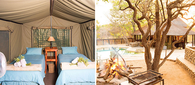 buffaloland safaris, hoedspruit, self catering accommodation, tented camp, nyati pools, giraffe camp, african safari adventures, wedding venue, bush camping, limpopo